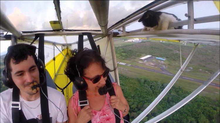 Cat Airplane Joyride