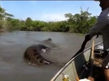 MAN GRABS GIANT SNAKE FROM THE WATER