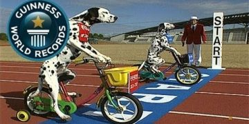 dogs-riding-kiddie-bikes