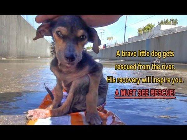 brave-little-dog