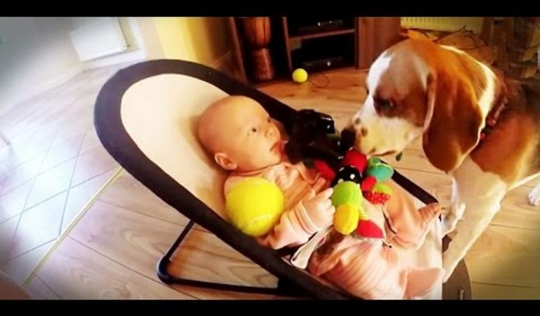 Guilty Dog Brings All the Toys to Crying Baby